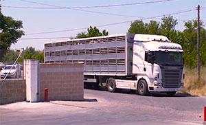 Camión transporte ganado